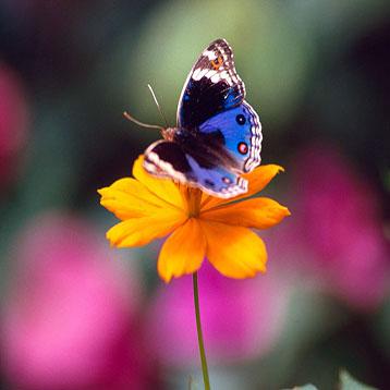 Muhteşem Güzellikte Yaratılmış Kelebekler Mucizesi