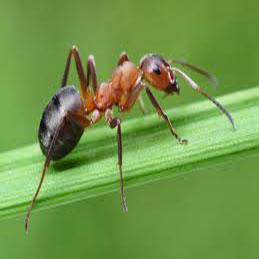 Karıncalar Doğal Afet Önlemleri Alıyor