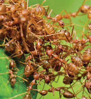 Konuşan Karıncalar (Kuran-ı Kerim Mucizesi)