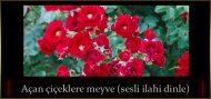 Açan çiçeklere meyve (sesli ilahi dinle)