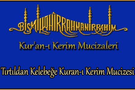 Tırtıldan Kelebeğe Kuran-ı Kerim Mucizesi