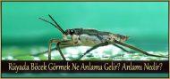 Rüyada Böcek Görmek Ne Anlama Gelir?  Anlamı Nedir?