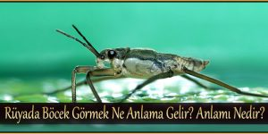 Rüyada Böcek Görmek Ne Anlama Gelir