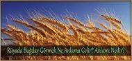 Rüyada Buğday Görmek Ne Anlama Gelir?  Anlamı Nedir?
