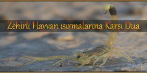 Zehirli Hayvan ısırmalarına Karşı Dua